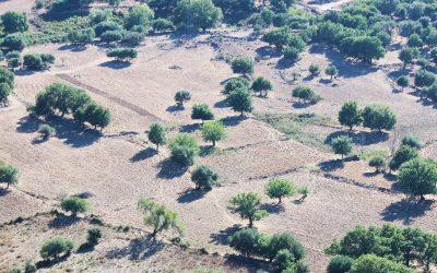 Publication majeure dans Science sur le potentiel mondial de la reforestation contre le changement climatique
