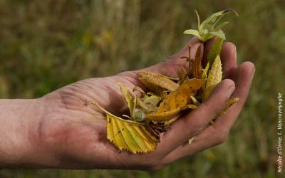 Journée d'échanges : Est si on plantait des espèces locales ? | Agence régionale de la biodiversité Centre-Val de Loire – le 17 octobre à Ingré (45) 🗓 🗺