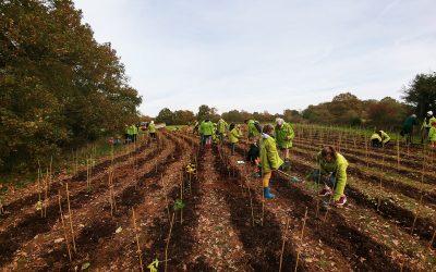 La saison des plantations est ouverte : première animation à Rennes