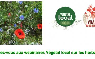 Webinaire Herbacées #2 : Végétal local en milieu urbain, (ré)concilier fleurissement et biodiversité 🗓