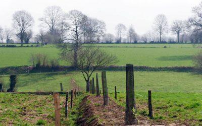 Plantons en France : appel à projets 2020-2021 et évolution du programme