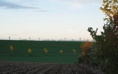 ZOOM SUR UN JURY LOCAL EN GRAND-EST : Concours des pratiques agro-écologiques – Agroforesterie 2021