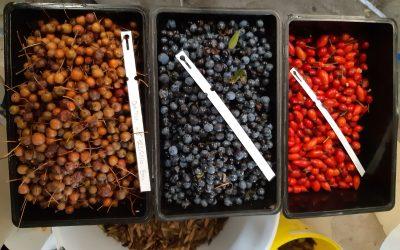 Consultation : l'Afac-Agroforesteries recherche un prestataire pour la création de son futur logiciel de gestion de la production de semences d'origine locale