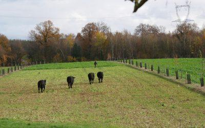 ZOOM SUR UN JURY LOCAL DANS L'EURE : Concours des pratiques agro-écologiques – Agroforesterie 2021