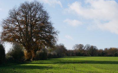 ZOOM SUR UN JURY LOCAL EN NOUVELLE AQUITAINE : Concours des pratiques agro-écologiques – Agroforesterie 2021