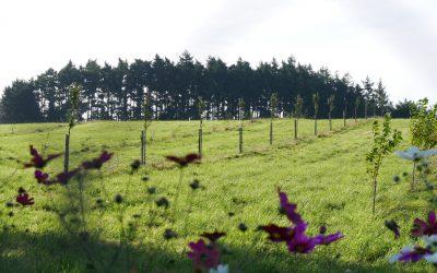 ZOOM SUR LE JURY DANS LE GRAND BASSIN DE L'OUST – Concours des pratiques agro-écologiques – Agroforesterie 2022